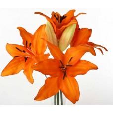 Оранжевые лилии поштучно от 9 штук