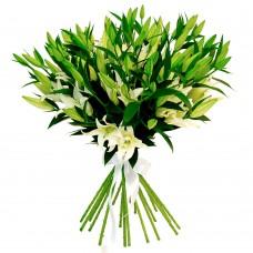 Твои любимые лилий